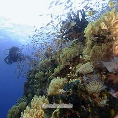 Malla e os corais filipinos