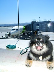 Viajando con Mascotas