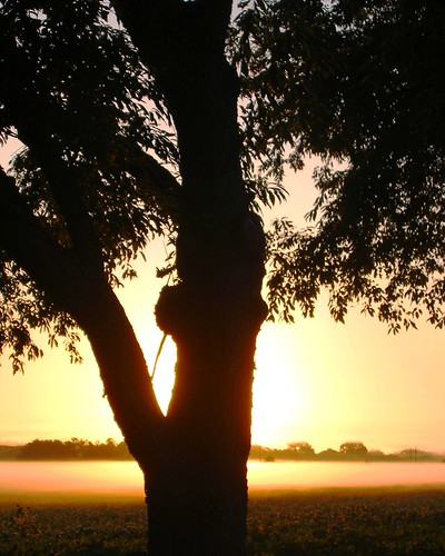 Tree in Sunrise