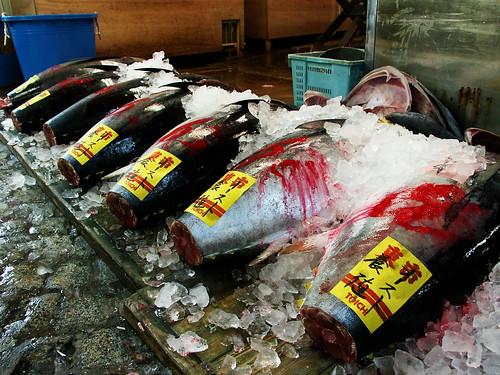 oh my tuna!