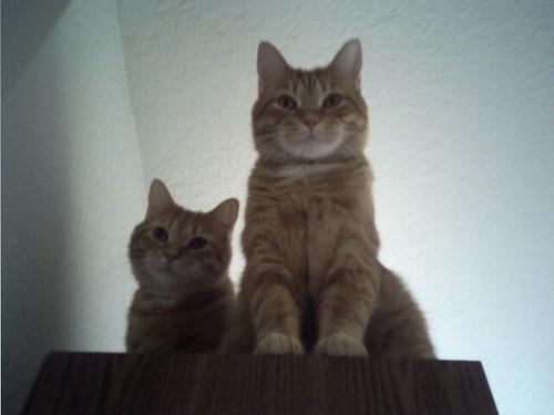 Bookshelf Cats 2