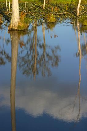 WetlandsLoRes