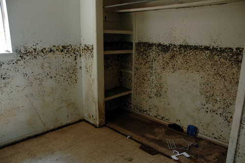 black mold house6-1web copy