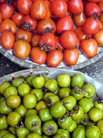 Citrus Fruits Dog Collar Uk