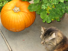 Sept. 20 - Fuzzy with pumpkin
