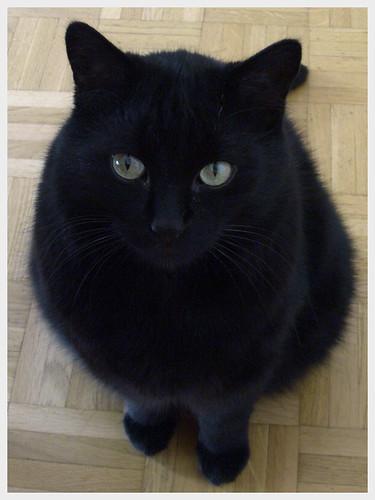 Mon chat Rocco, c'est le plus beau.