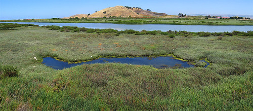 This shot shows my sle site a slough side pan adjacent to the