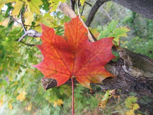 Leaf Splat