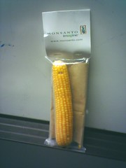 Popcorn on the cob