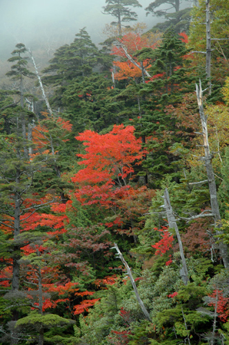 autumn at Mt. Konsei
