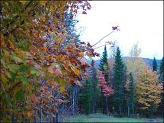 Forêt-automnale