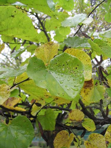 rainy leaves