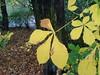 Autumn Leaves (2 of 2) in Edinburgh - a garden off Howe Street