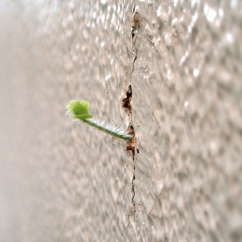 wall sprout 1