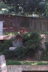 Tumbling Tigers