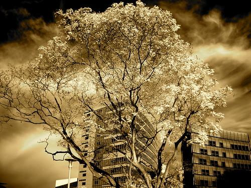 Tree - Building - Sky
