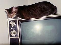 Luthian on TV