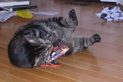 Duncan takes a turn teaching the catnip pillow a lesson
