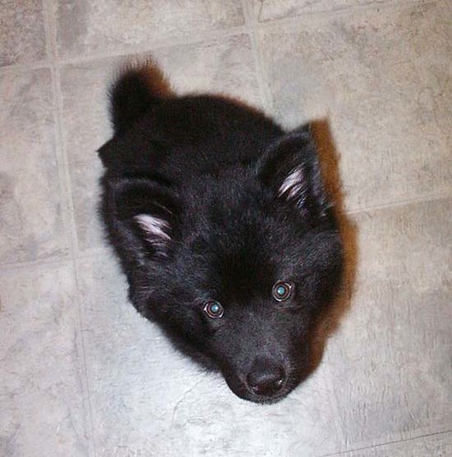 mishka at six weeks
