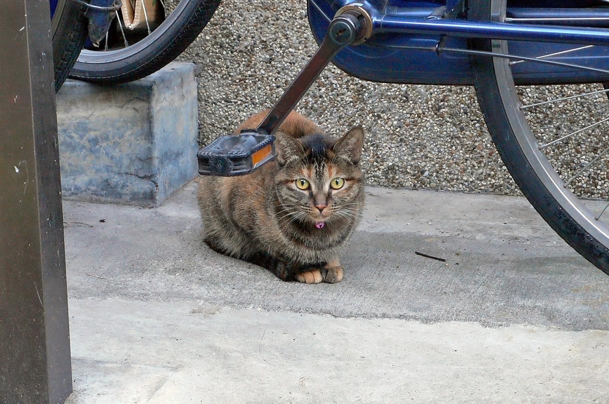 住宅地の猫