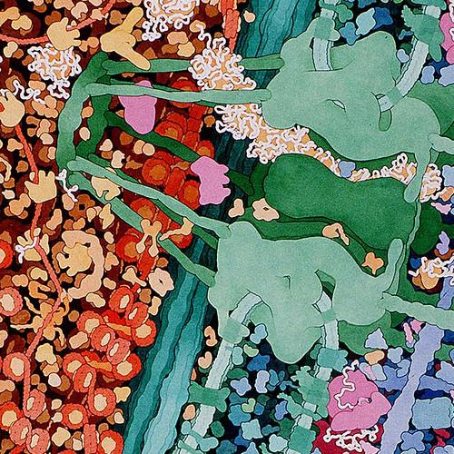 of Cell Biology - man s Cell Biology Art