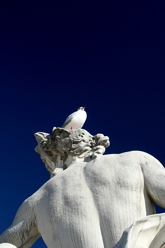 one bird on one statue