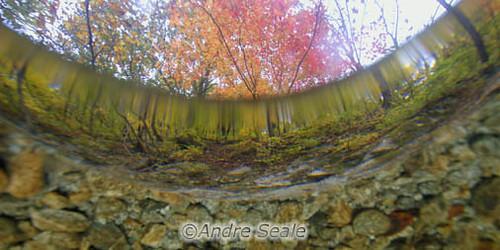 Outono sub