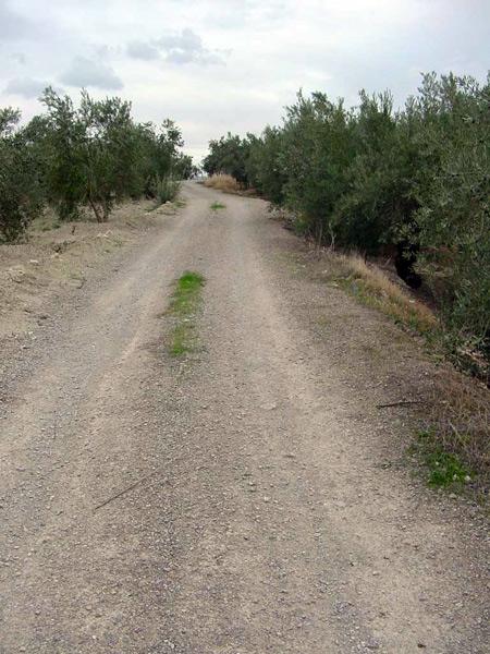 camino entre olivar