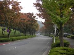 帰り道 / Way home