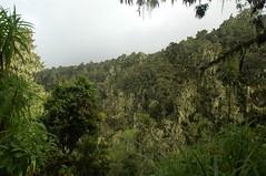 Het regenwoud...
