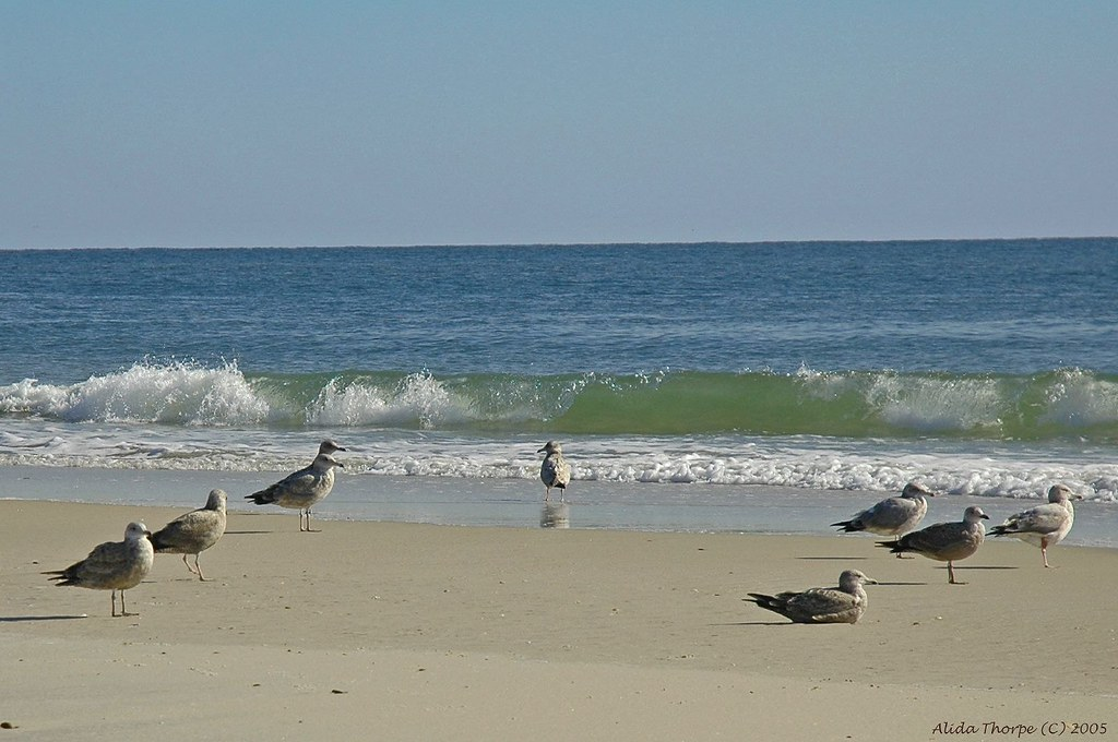 Gulls at the beach