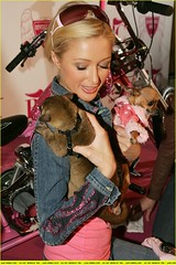 paris-hilton-kinkajou-motorcycle05
