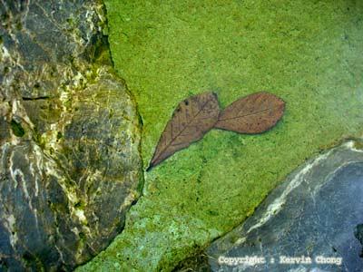 Leaf-spring