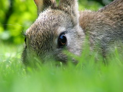 rabbit photo by peet-astn