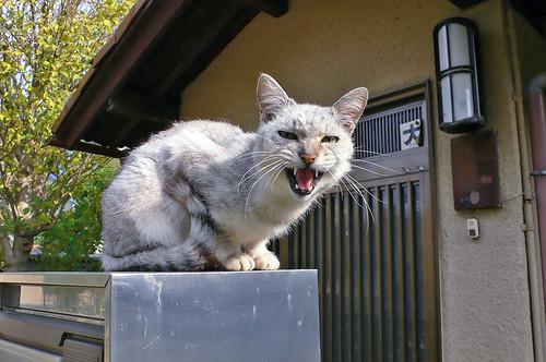 高いところから威嚇する猫