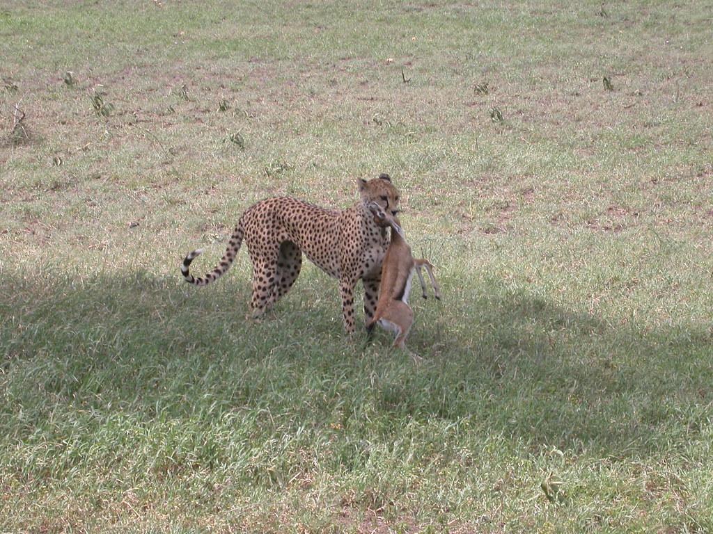动物奔跑动画不同角度
