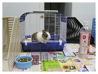 新手養兔兩星期心得_第2天