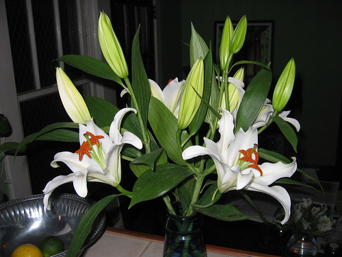 Dominic's Lilly