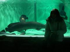 巨大魚たち.JPG