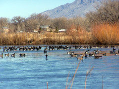 Rio Grande Nature Center in January