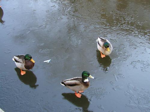 Amsterdam January 2006 020