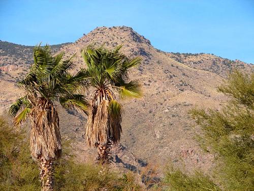 Feb 06 Tucson 027