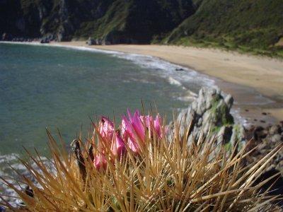 Cactus Chilenos en Habitat 95949365_79e50e8253_o