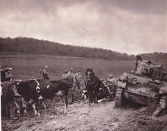1944 - Franche Comté - Près de Belfort, des paysans prêtent leurs boeufs à un convoi en difficulté - éditions GP - Du Tchad au Danube