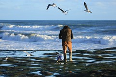 Surfcaster Re-baiting Opportunist Seagulls Rocky Tidal Platform  Muriwai Beach Auckland's West Coast  New Zealand photo by eriagn