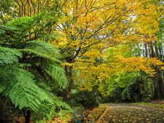 Nicholas Gardens, Dandenong Ranges - Explored photo by Marian Pollock (Weiler) - Thanks for 500,000 views