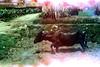 14220288709_4b2114ed4a_t