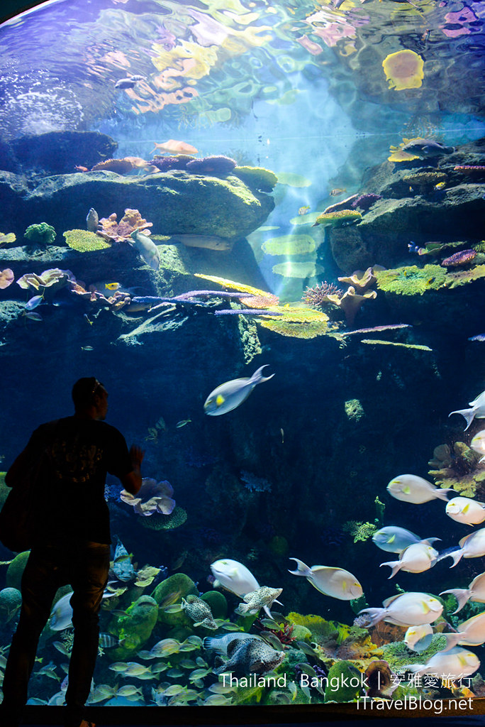 Siam Ocean World Bangkok 43