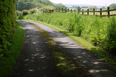 See the road ....... and walk photo by Lancashire Lass ...... :) :) :)
