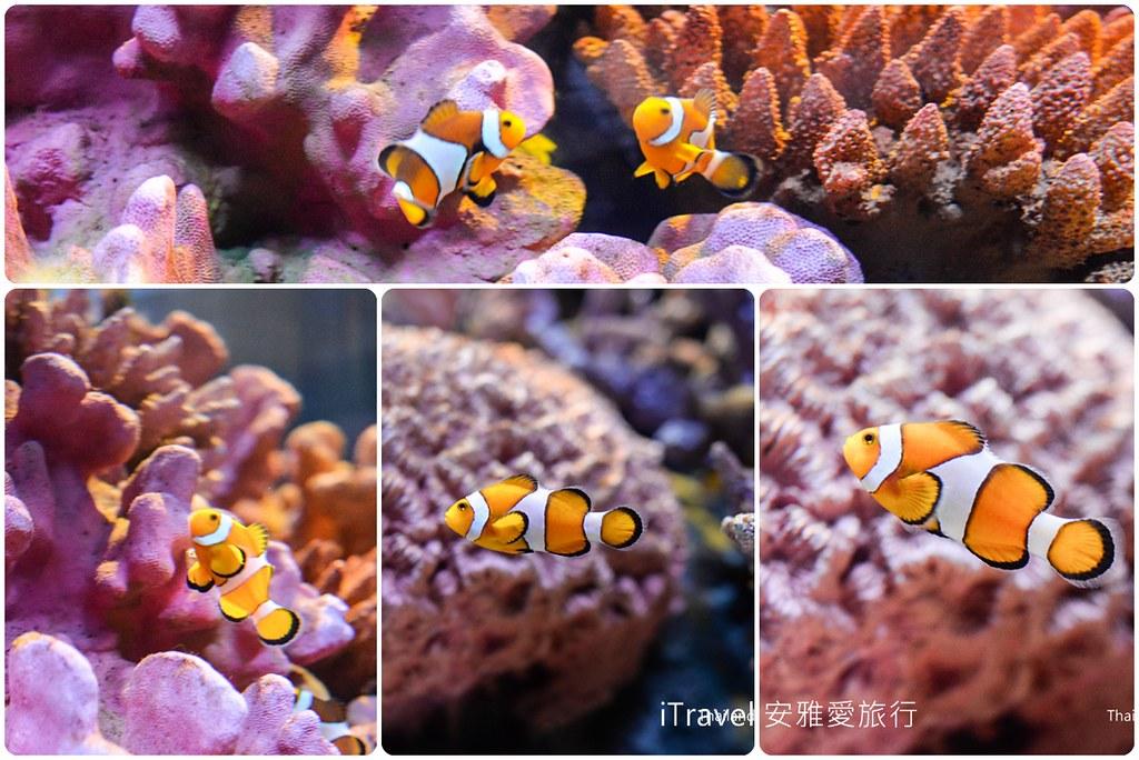 Siam Ocean World Bangkok 21